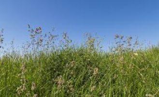 Pollenflugkalender